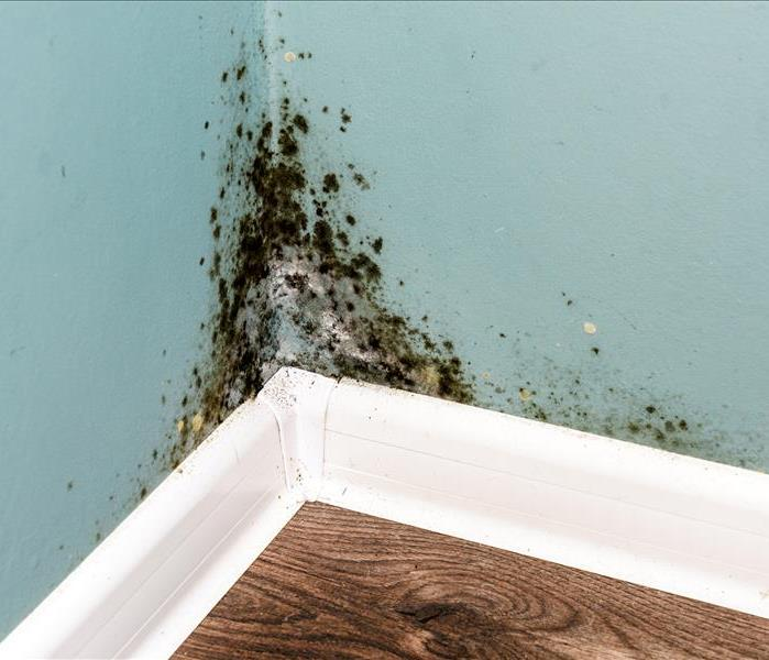 Why SERVPRO How SERVPRO Remediates Mold From Your Portage Home
